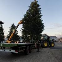 2019 Der Weihnachtsbaum